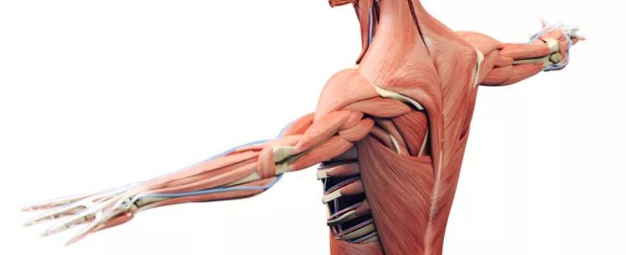 Non-joint musculoskeletal pains